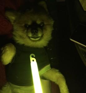 セーフティーライトと犬